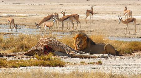 10 beste safarier i Afrika