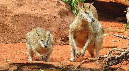 Minner fra Australia