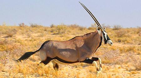 Safari i magiske Etosha