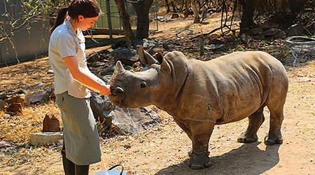 Dyrene på Moholoholo rehabiliteringssenter