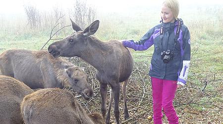 Møte med elg i Sverige