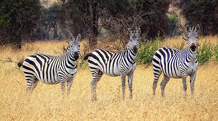 Swara Plains - et afrikansk paradis