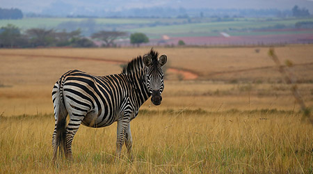 Safari i Swaziland